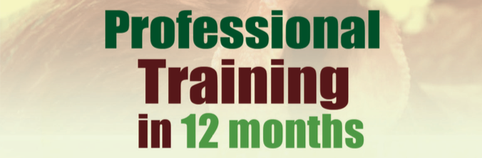 12-month-training.png